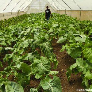 watoto greenhouse