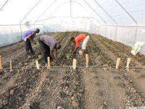 watoto planting