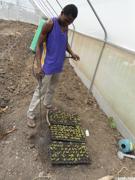 Planting the Seeds of Education and Nutrition