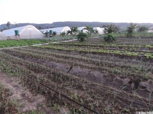 The greenhouses and crops at the Fiwagoh Home.